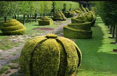 Yew topiary - Highgrove