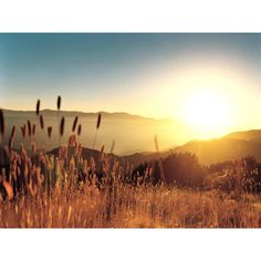 wheat sunset field Pictures, wheat sunset field Images, wheat sunset... ❤ liked on Polyvore