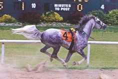 It is simply NOT the kind of Win Photo a race horse owner or trainer wants in their album…but there it is. RFR Silver Crescent, head up, nostrils flared, mane flying and silver tail streaming out behind, galloping across the finish line at Mt. Pleasant Meadows Race Track…without his jockey!