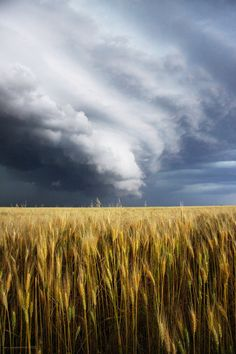 Storm on a Wheat Field by ~mfunston