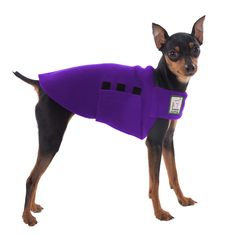 Purple Miniature Pinscher Dog Tummy Warmer, great for warmth, anxiety and laying with our dog rain coat. High performance material. Made in the USA.