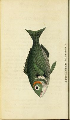 v.1 (1798) - The Naturalist's Pocket Magazine or compleat cabinet of the curiosities and beauties of nature. - Biodiversity Heritage Library