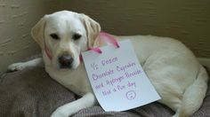 """It's scary when your pup consumes things dangerous for them...like chocolate! Refer to our """"for dog owners"""" board for a list of doggy food do's and don'ts!!!"""
