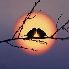 Bird couple in the sunset Beautiful Nature Wallpaper, Beautiful Moon, Beautiful Birds, Beautiful Landscapes, Animals Beautiful, Cute Animals, Sunset Photography, Popular Photography, Photography Poses