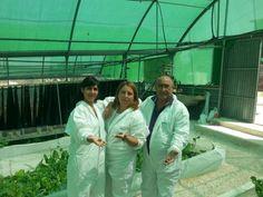 Criar caracoles, una alternativa al desempleo - La Opinión de Málaga
