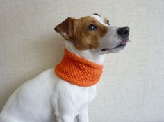 This Jack Russell looks just like my Martini...she would look so cute in this scarf!