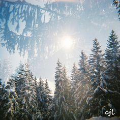 #neige #montagne #sapins #lomography #lomographie