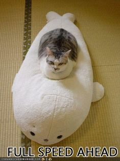 No time to explain, just get on the seal!