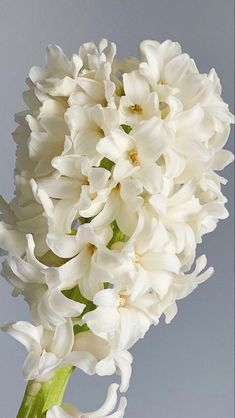 Dark Plum Flowers, Peach Flowers, All Flowers, White Flowers, White Hyacinth, Hyacinth Flowers, White Tulips, Purple Calla Lilies, Calla Lily
