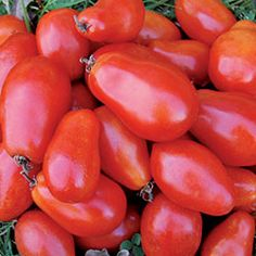 Tomato, Martino's Roma Organic | Seed Savers Exchange