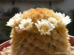 Resultado de imagen para injertos cactus suculentas de exposicion
