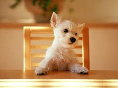 Is that a teeny tiny dog in a teeny tiny chair?