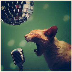 Rock'N'Roll, baby ~ by (kitty karaoke) Karaoke, Funny Cats, Funny Animals, Cute Animals, Funny Drunk, Hilarious, Cute Cats And Kittens, I Love Cats, Crazy Cat Lady