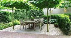 pleached trees around seating. This could be lovely nearer the house..