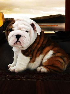 He doesn't even look real! This is what Indi's pups are going to look like.