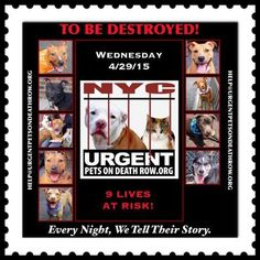 Urgent Part 2 - Urgent Death Row Dogs Kill List, Power Of Social Media, Losing A Pet, The Victim, Beautiful Babies, Animal Rescue, Pet Adoption, The Fosters, The Row