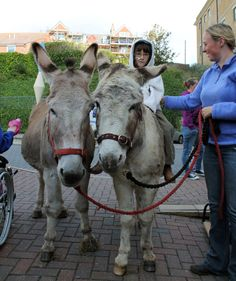 We funded a visit from donkeys Dermot & Charlie who visited young patients at the Royal Alexandra Children's Hospital in Brighton