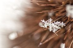No two alike they say. Amazing little pieces of art. Snowflake.