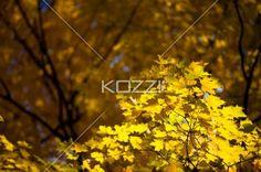 image of autumn tree. - Scenic image of autumn tree.