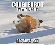 Corgi Error!