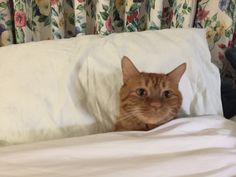 Cat on bed