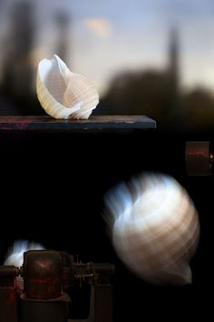 """Landscape with Shells ~ 2011 ~ 22"""" x 33"""""""