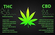 Keep in mind....they are two separate and independent things. While many people are open to, and aware of the benefits of both, THC is not legally available everywhere. CBD is! And it's available for sale and provides a long list of benefits without getting high! #googleit