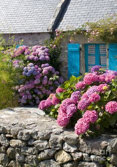 Country Style ~ France