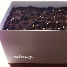 Mini-horta Life in a bag baby leaves