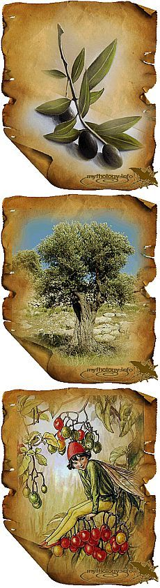 Мифологическая энциклопедия: Растения в мифологии: Олива