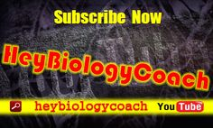 HeyBiologyCoach is the official channel of BiologyCoachOnline, Your Source for Virtual Biology Education. We are a digital platform for hosting courses on all things biology. From anatomy & physiology and anthropology to cell biology and evolution; and from genetics and plant biology to pathogens & human disease and wildlife of the world, BiologyCoachOnline offers both paid and FREE biology and life sciences courses for students of all education and interest levels. So whether you are a high…