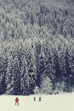 all the pines.
