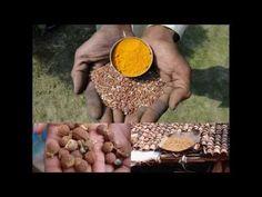 Medicinal Rice P5N Formulations for Clinacanthus Excess: Pankaj Oudhia's...