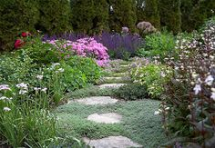 'Husker Red' penstemon and creeping thyme in garden