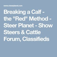 """Breaking a Calf - the """"Red"""" Method - Steer Planet - Show Steers & Cattle Forum, Classifieds"""