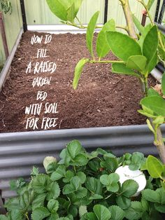 Find out how we filled a huge raised garden bed with a Soil for free @dutchyandrose on Facebook.