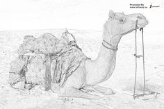admirable camel image@@.. For any query email: sales@infoway.us or visit: http://www.infoway.us/