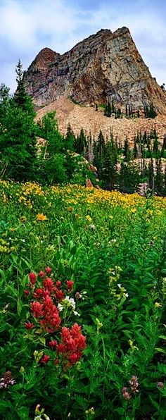 ~ Colorado in summer...Rent a cabin away in the mountains, away from everything for awhile.