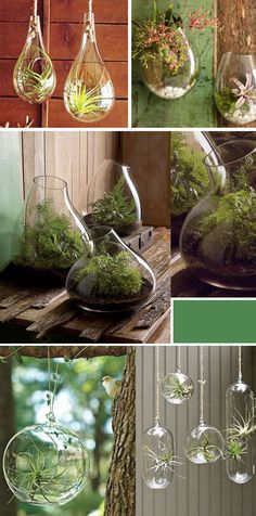Protecting our plants from. September and Sun: Hanging Terrariums: An Unexpected Way to Display Plants {Indoors & Outdoors} Hanging Terrarium, Air Plant Terrarium, Hanging Plants, Diy Terrarium, Hanging Succulents, Succulents Garden, Garden Plants, Planting Flowers, Air Plants