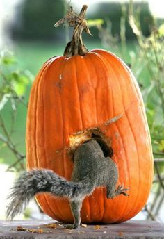 "Squirrel: ""Carving out some good times."""