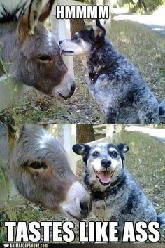 Funny Animal Captions - Should Have Known