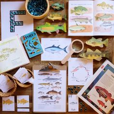To pair with our Rivers Unit last month. Keep in mind the learning represented in the photo spanned weeks… Fish Activities, Activities For Kids, Montessori, Forest School, Nature Study, Nature Journal, School Themes, Freshwater Fish, Childhood Education