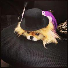 Lisa Vanderpump's dog Giggy lol!