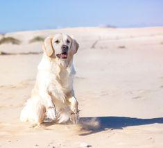 Balade à la plage de l'Espiguette avec son chien The adventure dogs