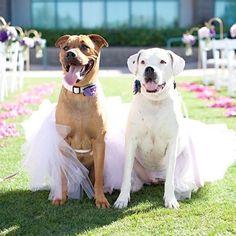 Divinos ❤️ #wedding #dog #doglover #bride #groom #bridesmaids #happy #unforgettable #love #weddingdress #weddinggown #weddingcake #family #smiles #together #ceremony #romance #marriage #weddingday #flowers #celebrate #guayaquil #ecuador #noviasecuador #noviasecuadortips