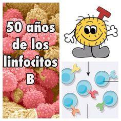 Este mes se cumplen 50 años del descubrimiento de los linfocitos B.  ¿Sabes qué es un linfocito? ¿Conoces a Tim?  Léelo en nuestro blog: http://www.divulgades.es/los-linfocitos-b-estan-de-cumpleanos/