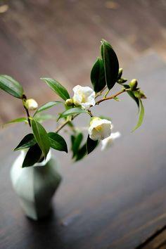 In Love with Japan Ikebana Flower Arrangement, Ikebana Arrangements, Modern Flower Arrangements, Exotic Flowers, Fresh Flowers, Beautiful Flowers, Ikebana Sogetsu, Herb Garden In Kitchen, Japanese Flowers