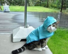 10 cat pictures from Hurricane Sandy #animals #cats #rescue #pets #hurricane #sandy #found