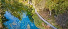 Admire the magnificent Blue Spring at Te Waihou Walkway Blue Springs, Walkway, New Zealand, Traveling, Journey, Water, Outdoor Decor, Summer, Gripe Water