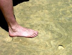 A human foot over the footprint of a theropod, the same kind of dinosaur T. rex was.